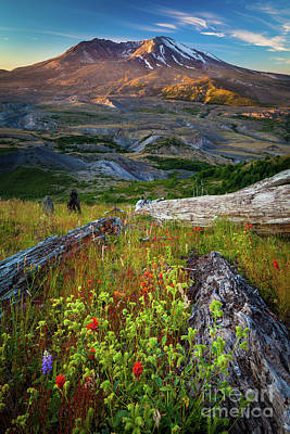 Mount Saint Helens Poster by Inge Johnsson