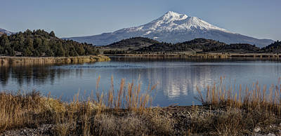 Mount Shasta And Trout Lake Poster by Loree Johnson