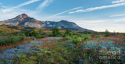Mount St Helens Glorious Field Of Spring Wildflowers Wider Poster by Mike Reid