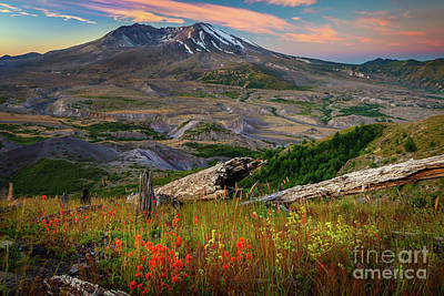 Mount St Helens Paintbrush Poster