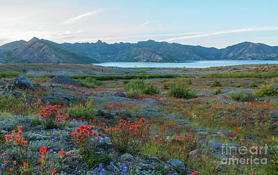 Mount St Helens Spirit Lake Fields Of Spring Wildflowers Poster by Mike Reid