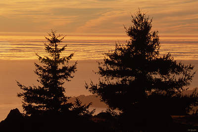 Mount Tamalpais State Park Poster by Soli Deo Gloria Wilderness And Wildlife Photography