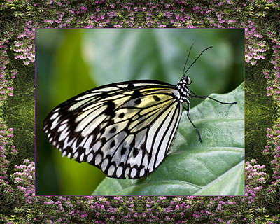 Poster featuring the photograph Mountain Butterfly by Bell And Todd
