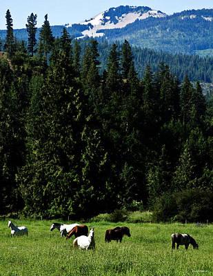 Mountain Herd Poster