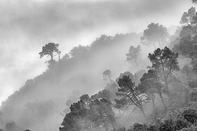Mountain Light II Foggy Forest Bw Poster by Guido Montanes Castillo