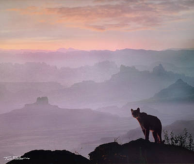 Mountain Lion Poster by Tim Fitzharris