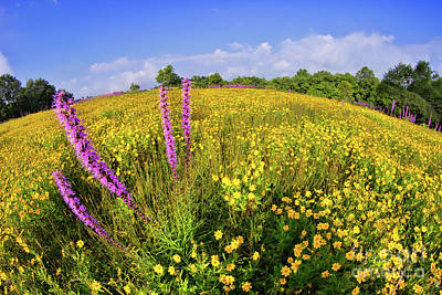 Poster featuring the photograph Mountain Of Summer Flowers In The Blue Ridge by Dan Carmichael