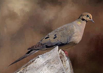 Mourning Dove Poster by Donna Kennedy
