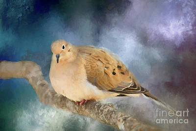 Mourning Dove Of Winter Poster by Darren Fisher