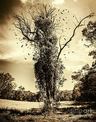 Mourning Tree Poster by Jorgo Photography - Wall Art Gallery