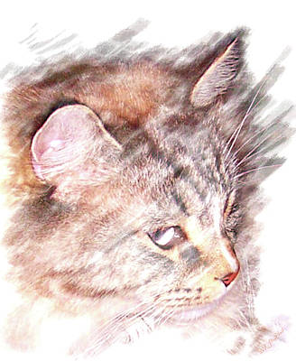 Poster featuring the photograph Mouser by Barbara MacPhail