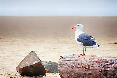 Mr. Seagull Poster