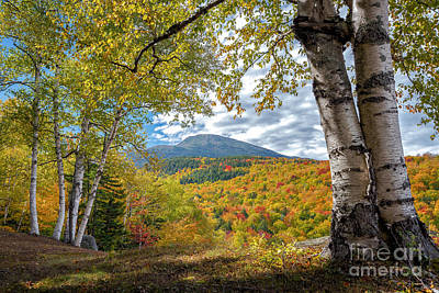 Mt Washington And Birches Poster by Scott Thorp
