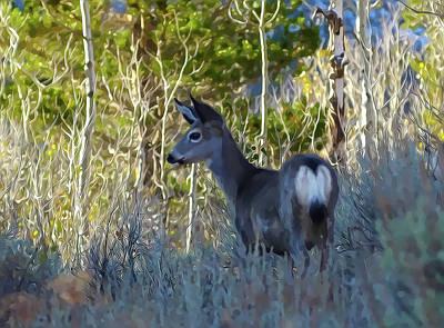 Mule Deer A Stylized Landscape By Frank Lee Hawkins Poster