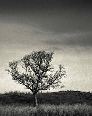 Mull Tree Poster by Dave Bowman