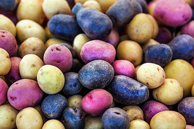 Multi-colored Potatoes Poster by Todd Klassy
