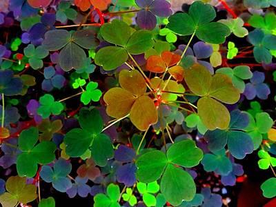 Multi-coloured Leaves Poster