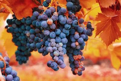 Multicolored Grapes Poster