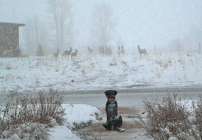 Murphy Watches The Deer Poster by Eric Tressler
