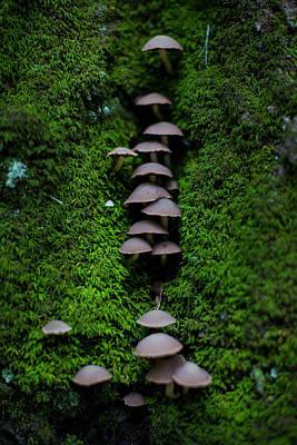 Mushroom Fall Poster