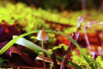 Mushroom Poster by Jeff Swan