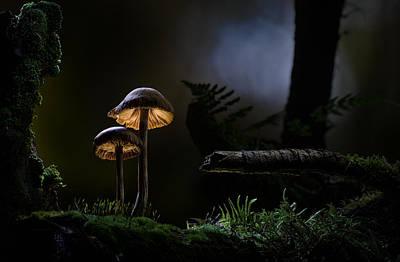 Mushroom Light Poster by Dirk Ercken