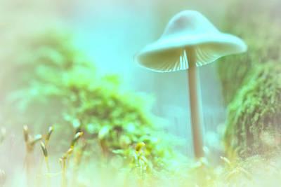Poster featuring the photograph Mushroom Misty Dreams, Mycena Galericulata by Dirk Ercken