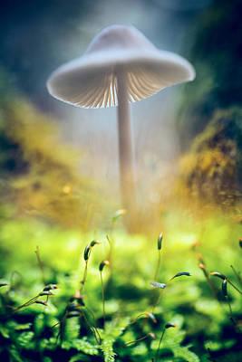 Mushroom Mycena Galericulata Poster by Dirk Ercken