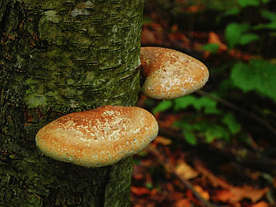 Mushroom Pair Poster