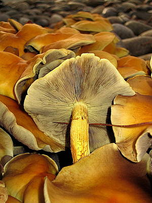 Poster featuring the photograph Mushroom Two by John King