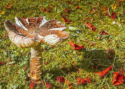 Mushroom Upclose Poster by Judi Saunders