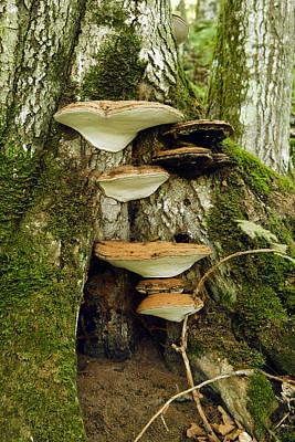 Mushroom Village Poster