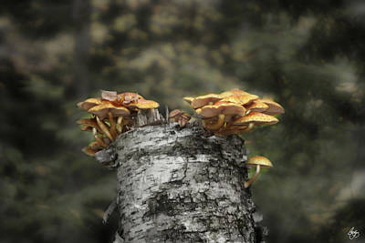 Mushrooms Atop Birch Poster