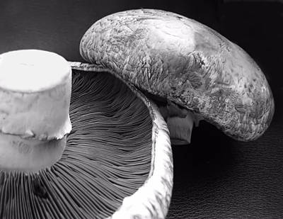 Mushrooms In Black And White Poster
