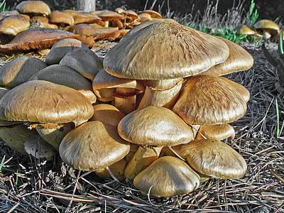 Mushrooms Poster by Lynn Andrews