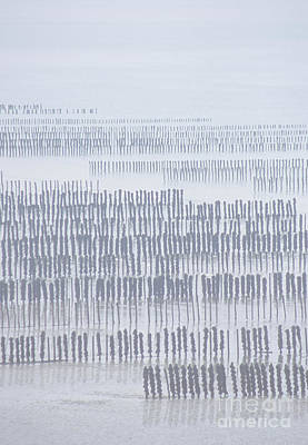 Mussel Poles In Shades Of Grey Poster by Girts Gailans