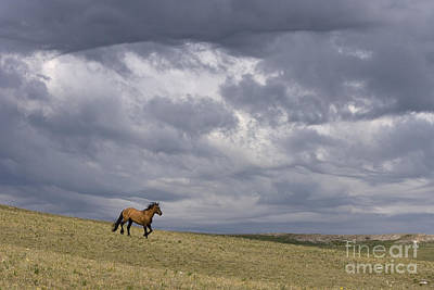 Mustang And Stormy Sky Poster