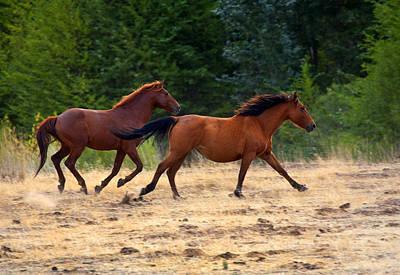 Mustang Gallop Poster