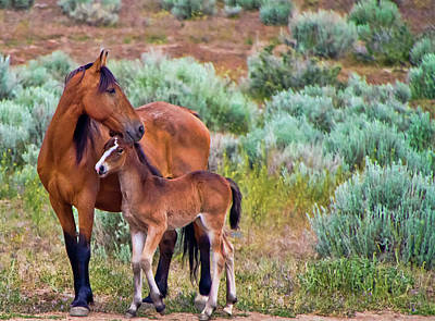 Mustang Horse And Foal Poster