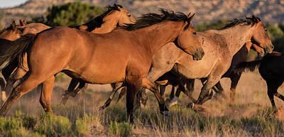Mustang Run Poster