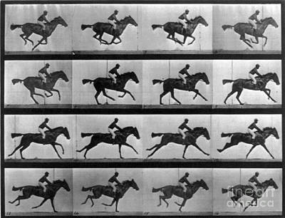 Muybridge Locomotion Racehorse Poster
