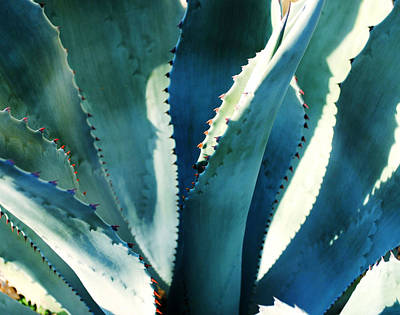 My Blue Agave Poster
