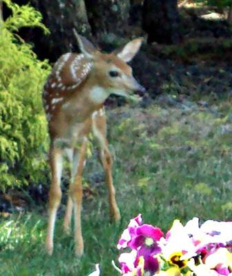 My Deer Friend...... Poster