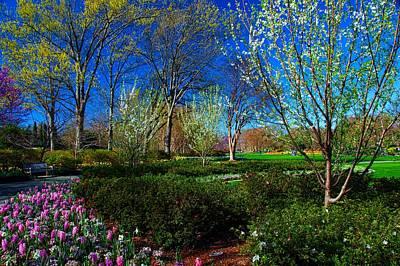 My Garden In Spring Poster