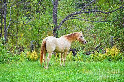 My Horse Cody - Digital Paint Poster by Debbie Portwood