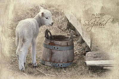 Poster featuring the photograph My Shepherd by Robin-Lee Vieira