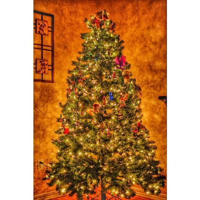 #myhouse #myhome #tree #christmas Poster by David Haskett