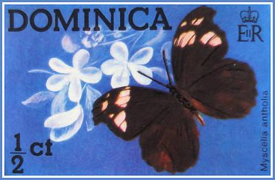 Myscelia Antholia Poster