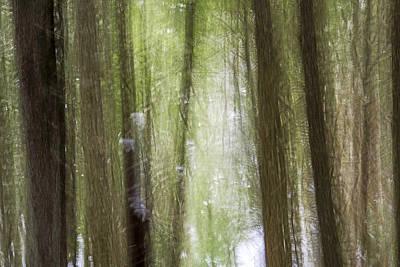 Mysterious Forest Rilke 1 Poster
