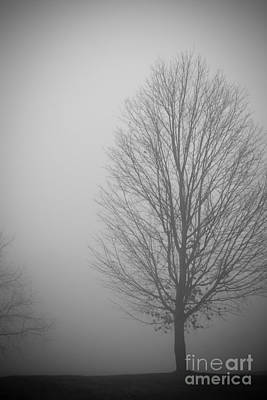 Mystery Morning - Monochrome Poster by Claudia M Photography